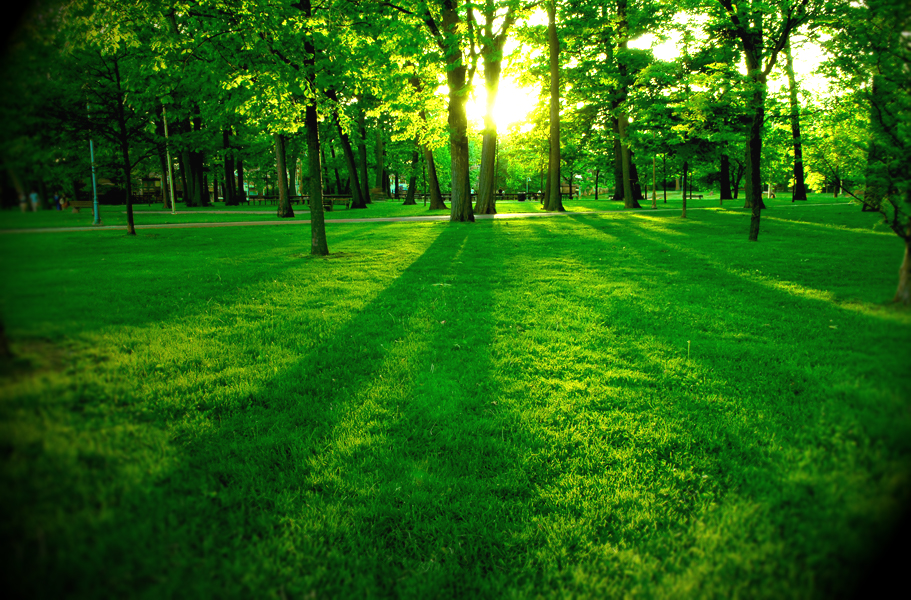 floresta-editada