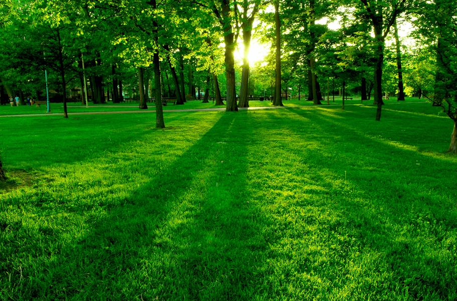 floresta-verde
